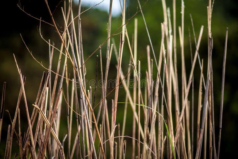 干草偷偷靠近,在绿色背景的黄色词根 库存照片