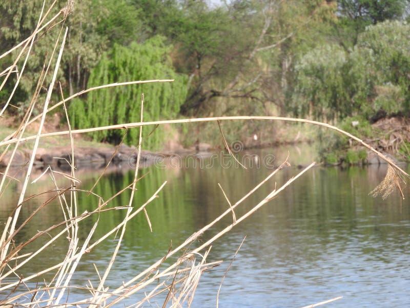 干草关闭有充满活力的绿色树背景 免版税图库摄影