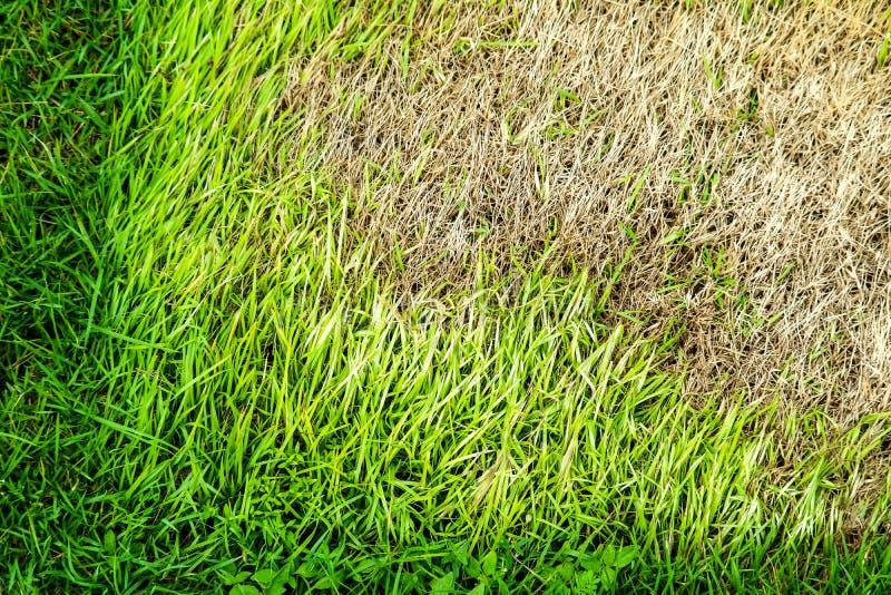 干草区域不可能增长,某事盖此并且没有太阳光 库存图片