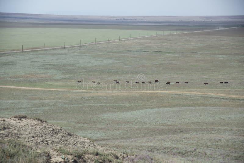 干草原克里米亚的夏天风景 免版税库存照片