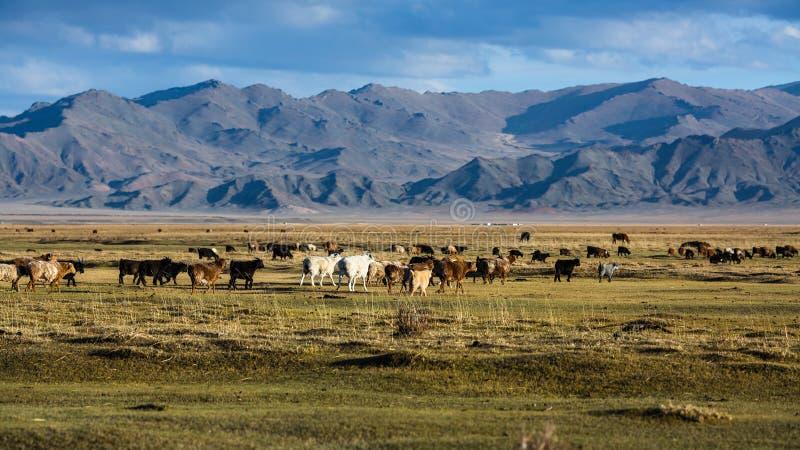 干草原和山的风景在瓦剌 免版税库存照片