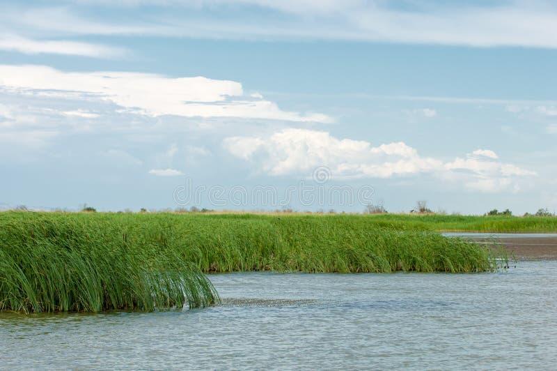 干草原的河 大草原 免版税图库摄影