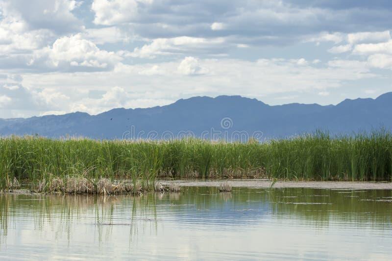 干草原的河 大草原 图库摄影
