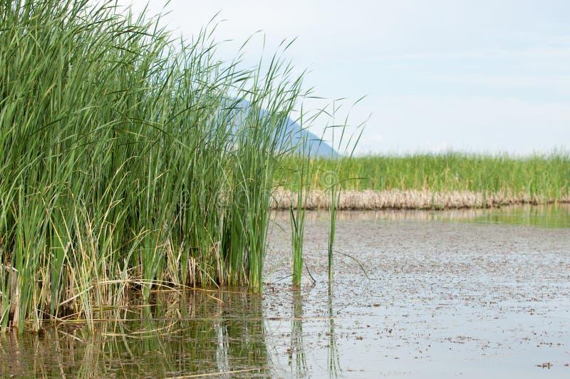 干草原的河 大草原 库存照片