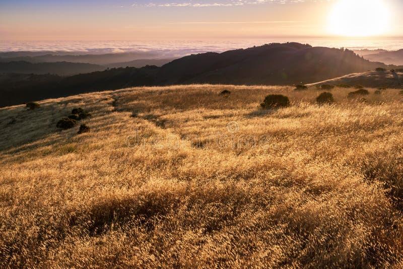 干草发光在日落太阳的,云彩可看见在背景中,圣克鲁斯山,旧金山湾区海, 免版税库存照片