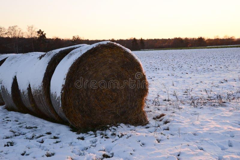 干草堆在冬天 图库摄影