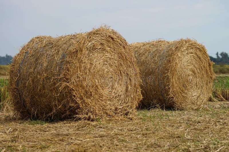 稻干草堆在沙白安南县 图库摄影