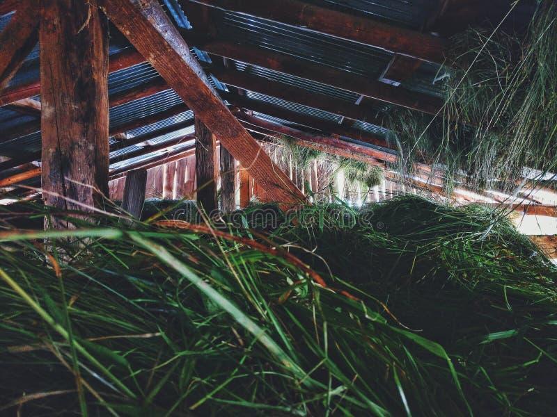 干草堆 库存照片