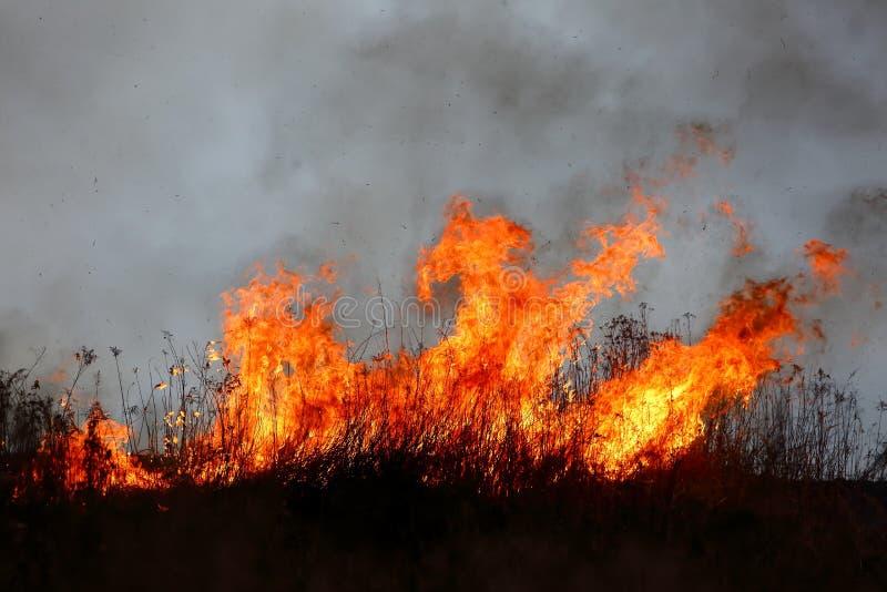 干草大区域火在草甸可能把变成一个可怕的悲剧,好象它得到了接近住宅房子 免版税库存图片