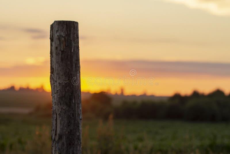干草天空夏天日落关闭 库存照片