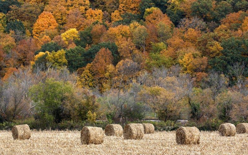 干草捆和秋天颜色 免版税库存照片