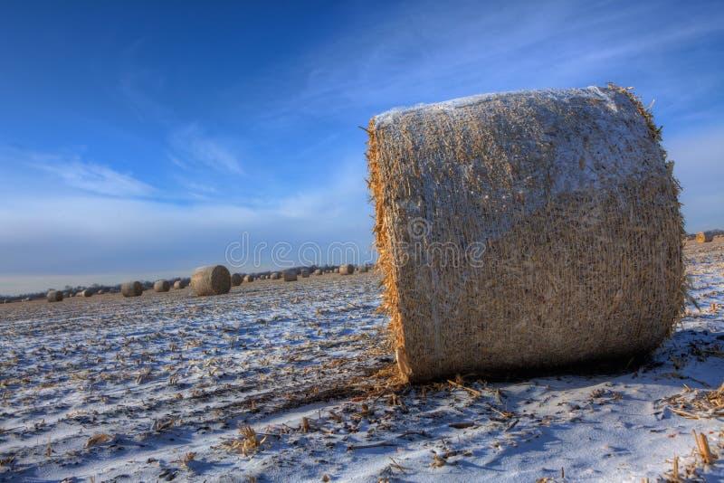 干草捆在冬天 免版税图库摄影