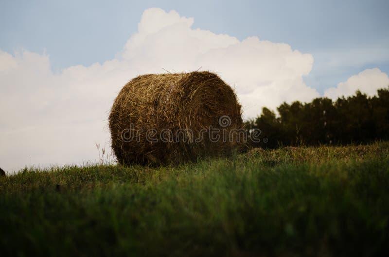 干草捆在草甸 秸杆和大包在领域 乡下自然风景 库存照片