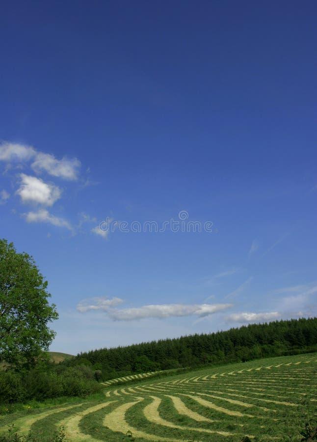 Download 干草排行漩涡 库存图片. 图片 包括有 香水, 环境, 弯曲, 土质, 线路, 绿色, 气候, 农田, 自然 - 179117