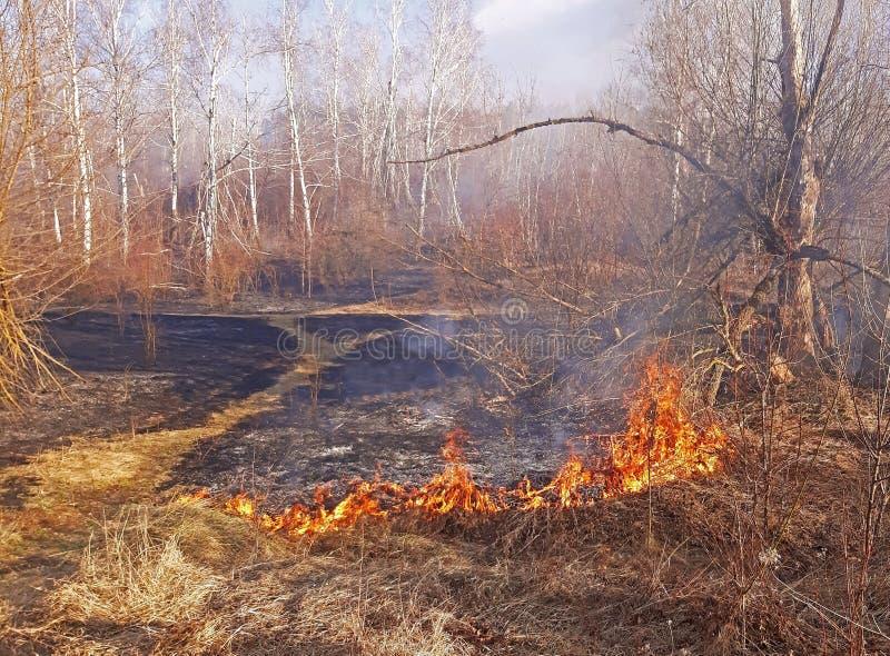 干草烧伤森林火灾在春天,强风扩展它 库存照片