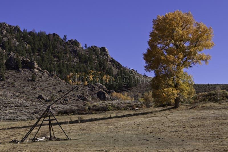 干草草甸和搂草机在三角叶杨树旁边 免版税库存图片