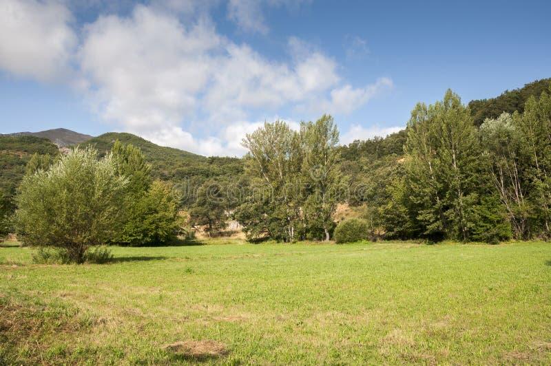 干草草甸和白杨树树丛图片
