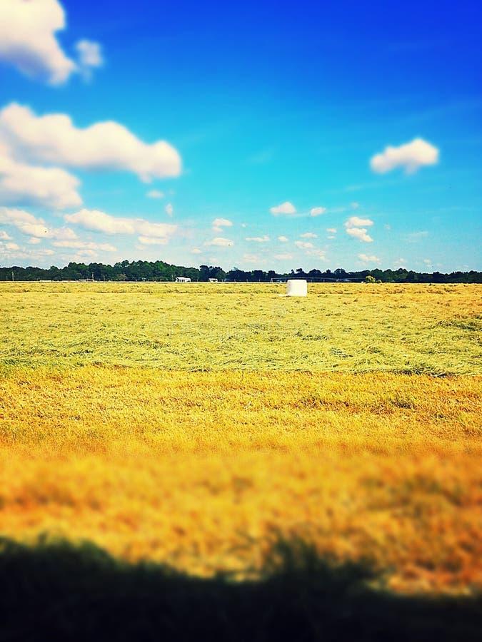 干草领域 库存图片