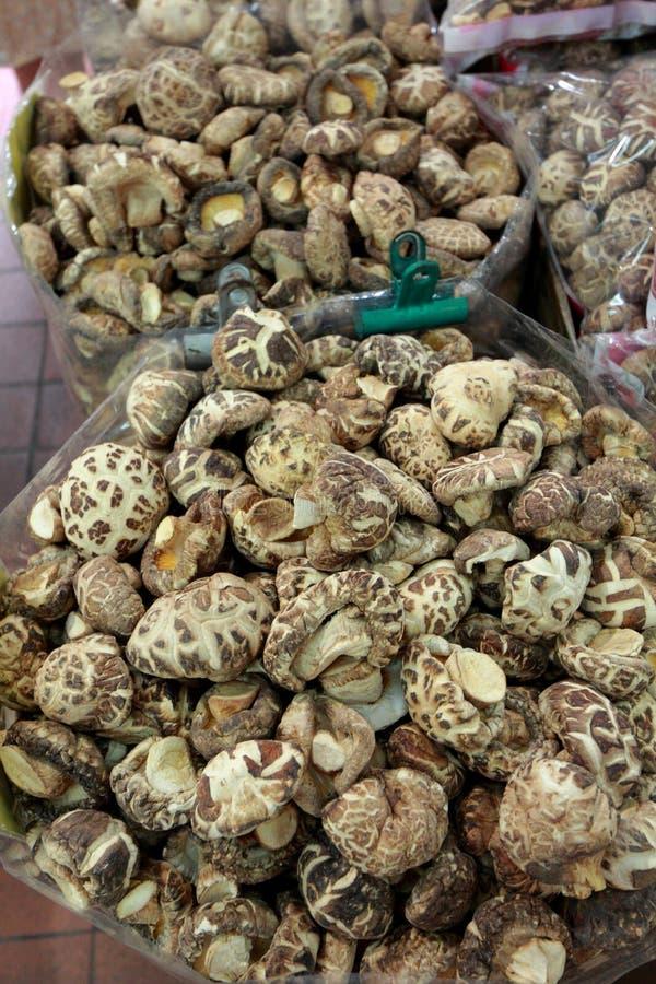 干蘑菇 免版税图库摄影