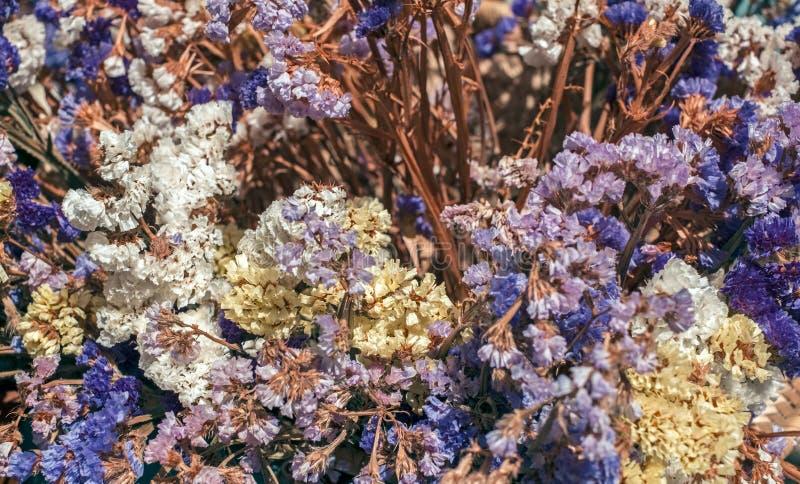 干装饰花的布置 库存照片