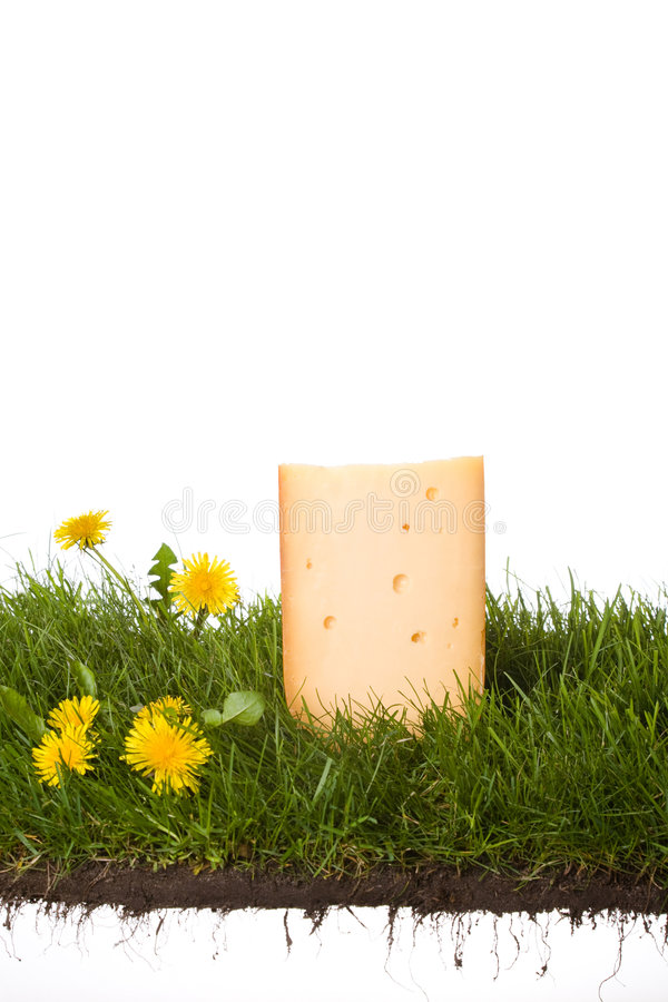 干酪荷兰语新鲜 库存照片