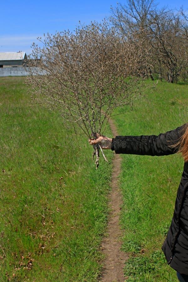 干野花花束在一个女孩的手上有长发的 E 免版税图库摄影