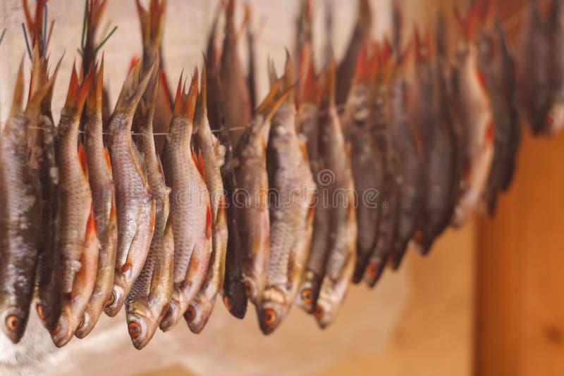 干鱼在阳光下 免版税图库摄影