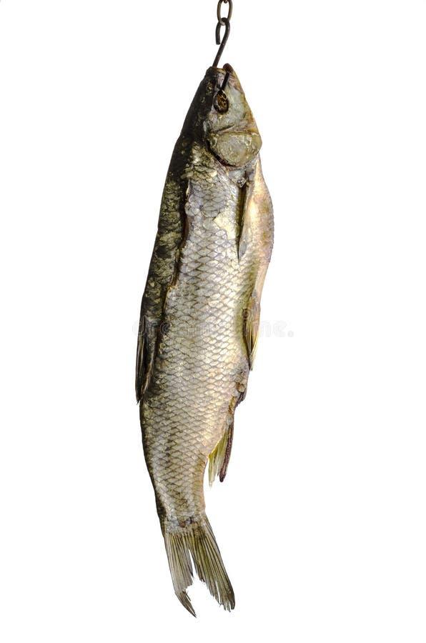 Download 干鱼3 库存图片. 图片 包括有 敌意, 商业, 海运, 干燥, 营养, 午餐, 健康, 蛋白质, 美食 - 72353375