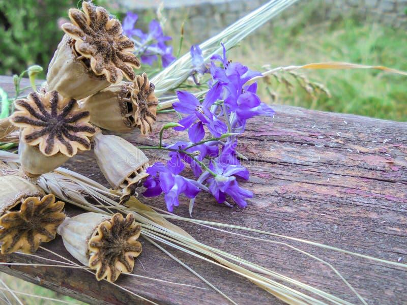 干鸦片荚和紫色翠雀花在一个木板说谎 免版税库存照片