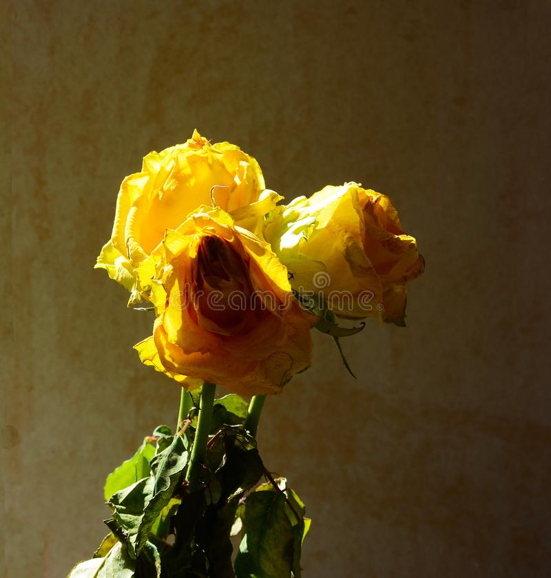 干黄色花装饰房子 免版税库存照片