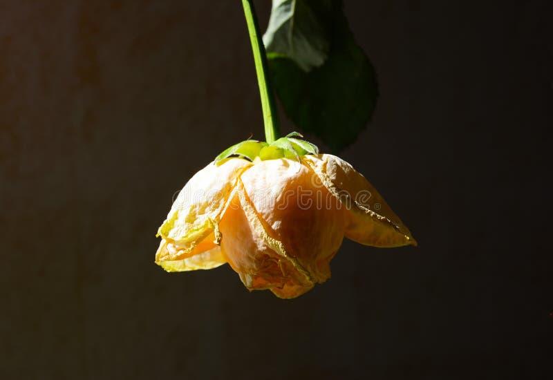 干黄色花装饰房子 库存图片