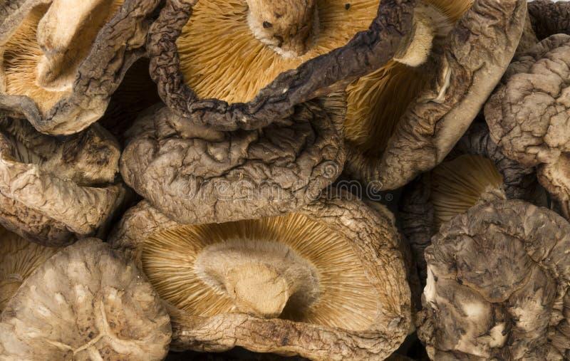 干Shitake蘑菇背景 r 库存图片