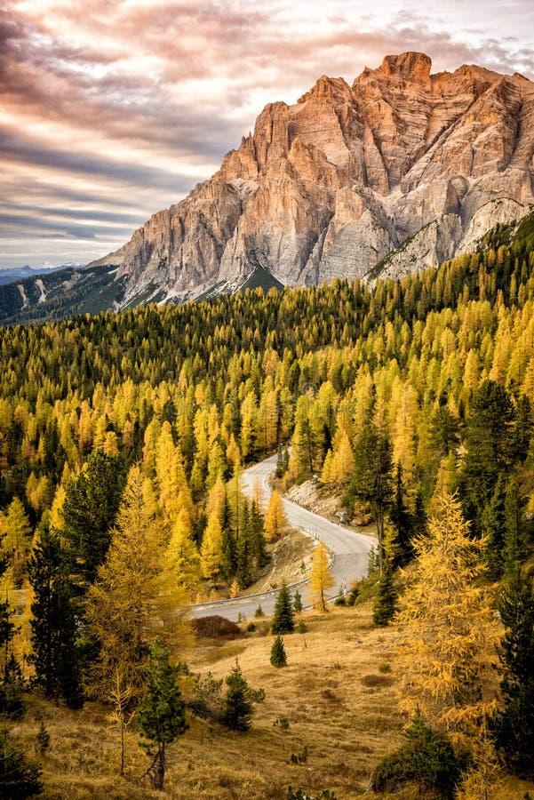 平交道口冷杉木森林在日落的在秋天,反对一个含白云石的峰顶的背景 免版税库存图片