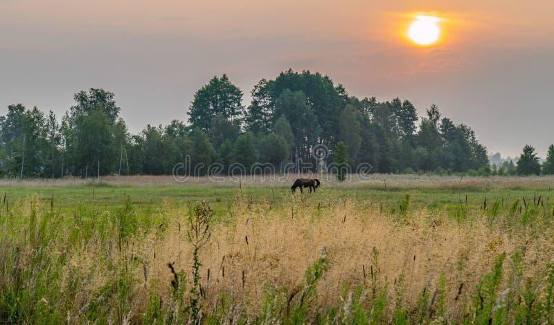 平安地吃草在一个绿色草甸的一匹孤独的马反对朝阳 库存图片