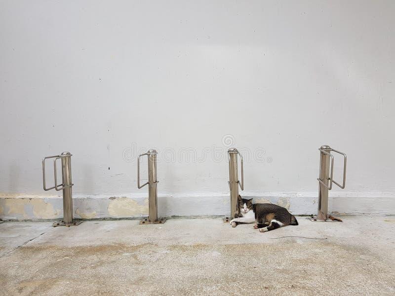 平安猫睡眠反对在晴朗的懒惰周末下午的金属杆 免版税库存照片