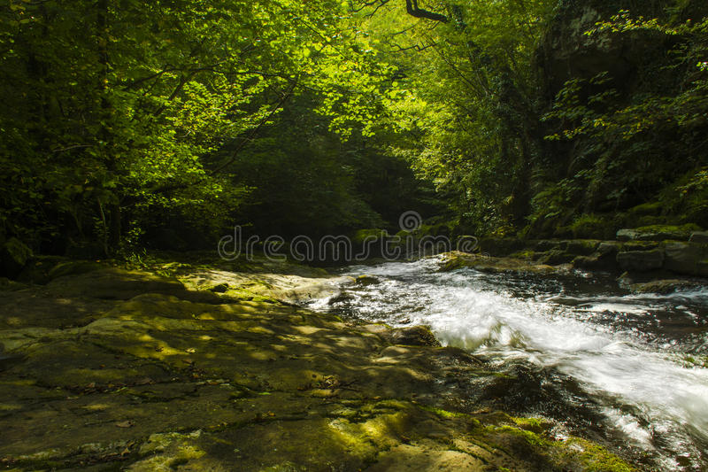 平安的小河在一个美丽的绿色森林里 库存照片