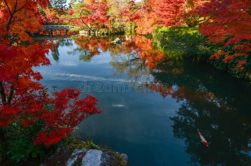 平安的日本池塘庭院在与红槭树的秋天在充分的秋天颜色 免版税库存照片