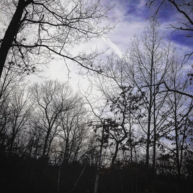 平安的森林 图库摄影