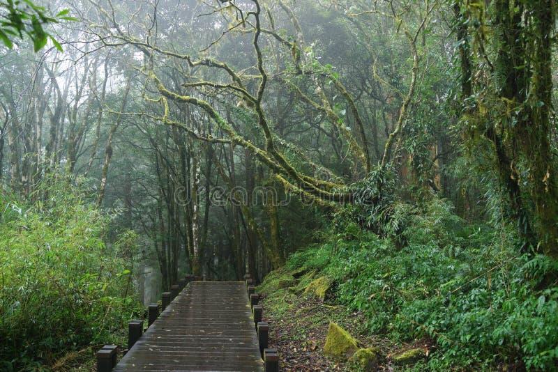 平安的森林 免版税图库摄影