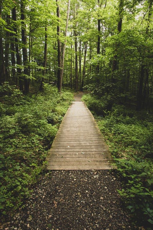平安的步行通过森林 免版税库存照片