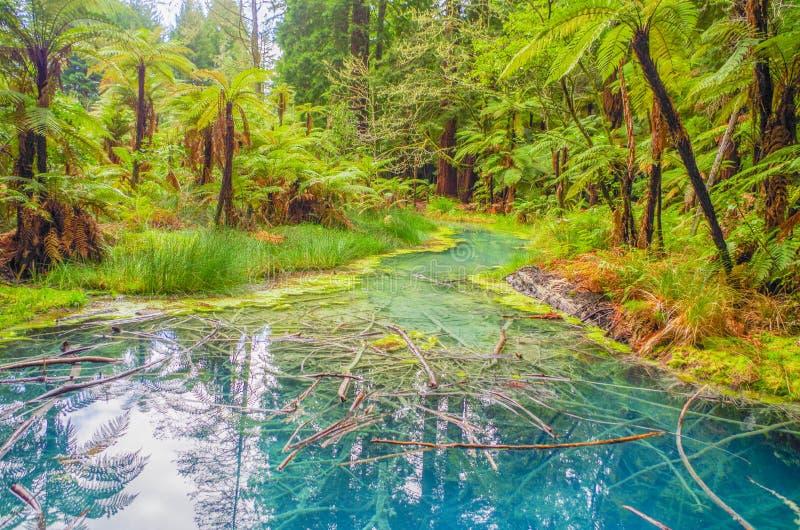 平安的片刻在森林里 免版税图库摄影