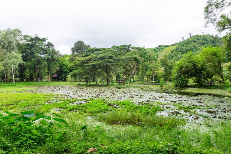 平安的自然池塘在森林里 图库摄影