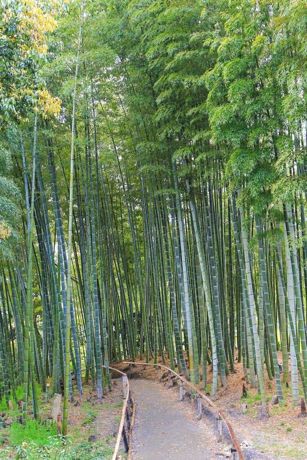 平安的道路穿过Kodai籍寺庙的绿色竹树丛在K 免版税图库摄影