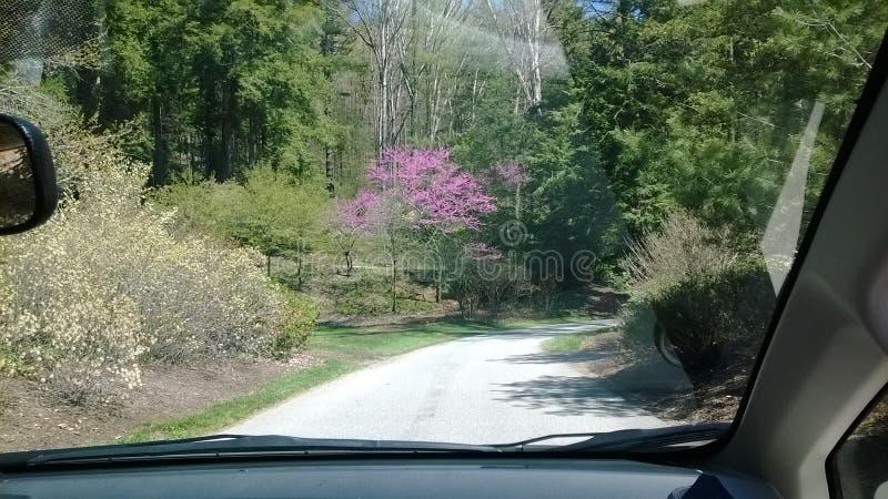 平安的驱动在春天期间的公园 免版税库存照片