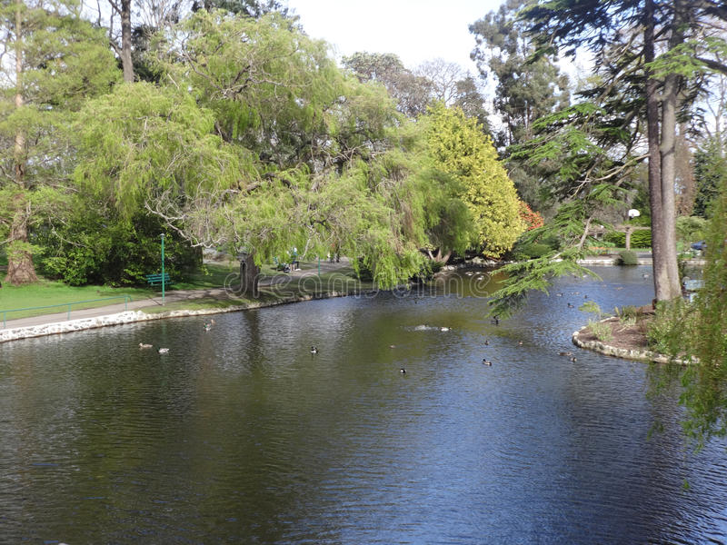 平安的鸭子池塘 免版税库存图片
