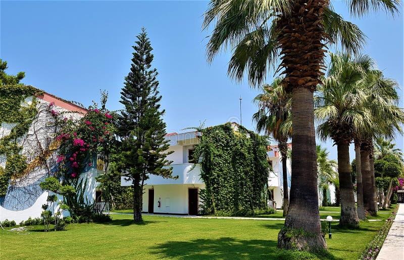 平房和棕榈在家庭旅馆,凯梅尔,土耳其里 库存图片