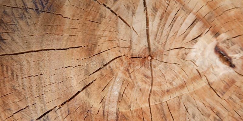 平的位置,里面树,您的元素设计的背景 库存照片