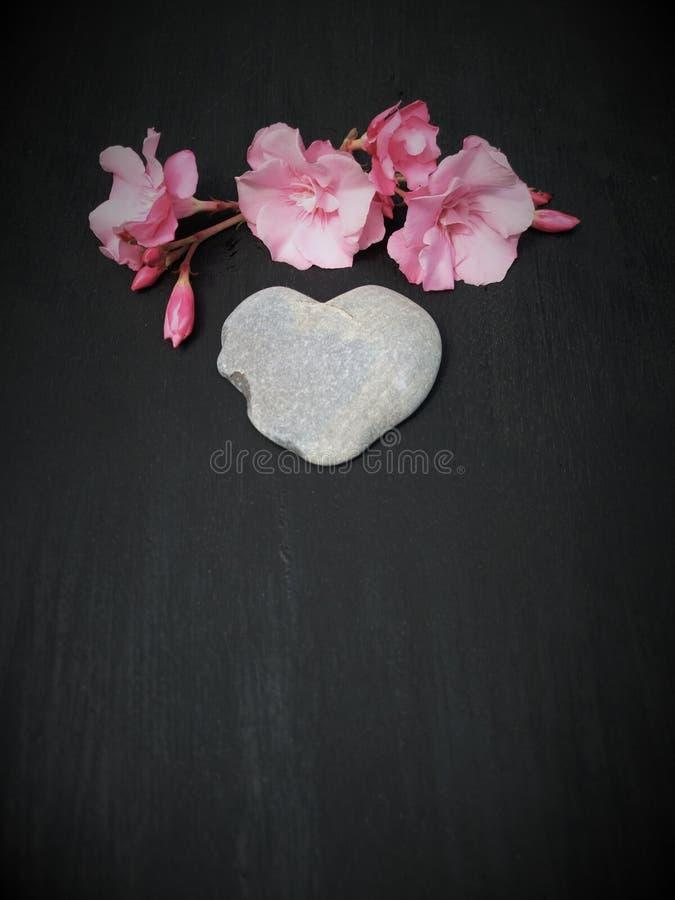 平的布局,顶视图,以心脏的形式一块石头与苦苣生茯黑色背景茎  库存照片