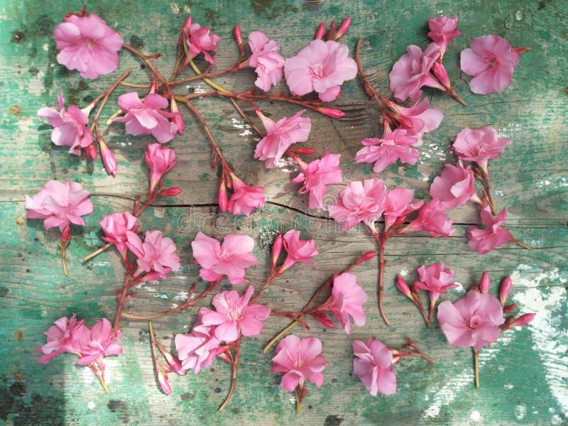 平的布局,顶视图,精美浅粉红色的夹竹桃花任意地计划木自然表面上 免版税库存图片