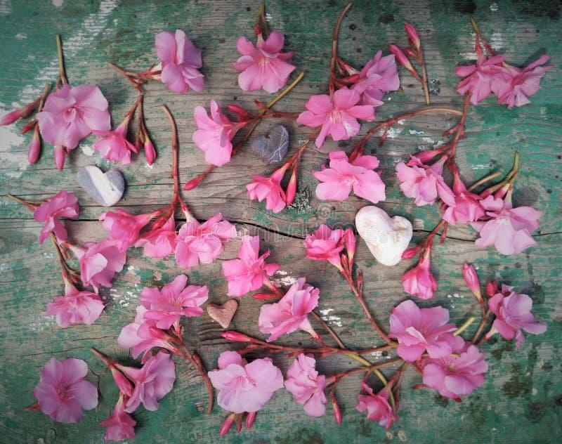 平的布局,顶视图,精美浅粉红色的夹竹桃花任意地计划木自然表面上 图库摄影